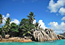 seychelles-palm-trees-feat