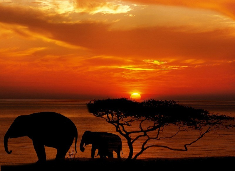 game-resort-african-sunset