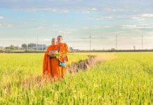 monks-in-field