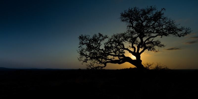 sunset-south-africa-bush
