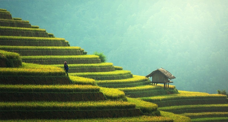 thailand-rice-land