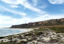elands-bay-landscape-beach