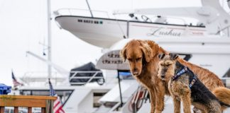 dogs on cruise ship