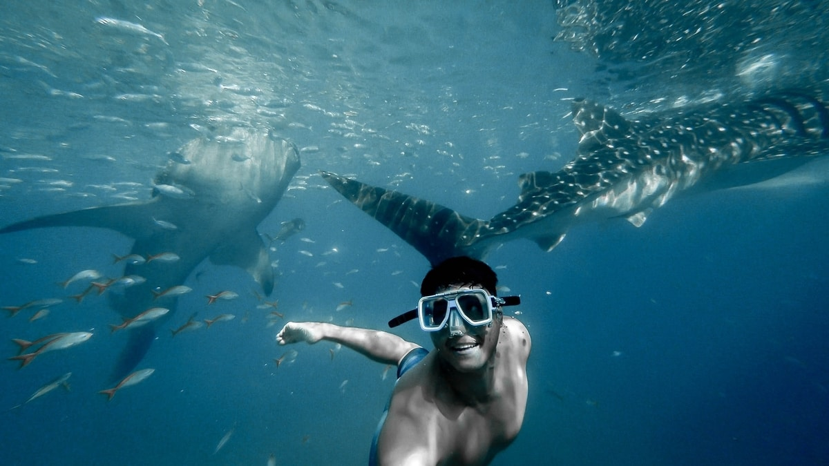 Man scuba diving with two whale sharks
